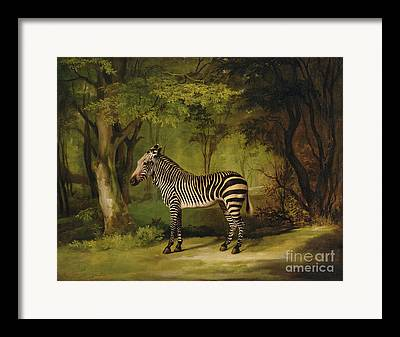 Stripy Framed Prints