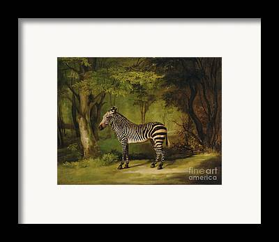 Animal Portraiture Framed Prints
