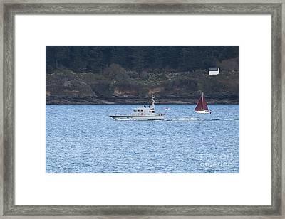 A43 Blazer Framed Print by Terri Waters
