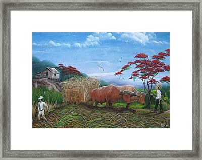 Aballarde  Y Melao Framed Print by Toyo Perez