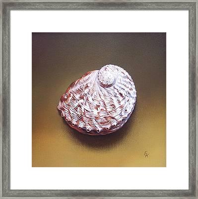 Abalone Shell - B Framed Print by Elena Kolotusha