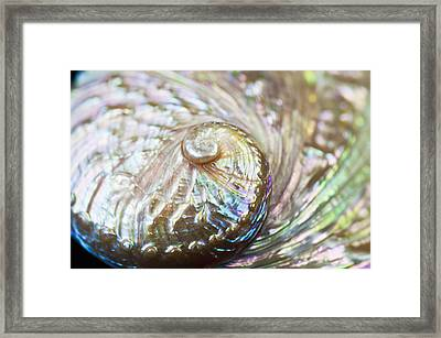 Abalone Shell Close-up Framed Print