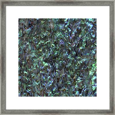 Abalone Shell Paua Shell Framed Print by Eclectic at HeART