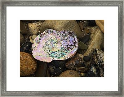 Abalone Shell Framed Print by Ron Regalado