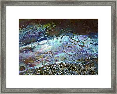 Abalone Stories Framed Print by Gwyn Newcombe