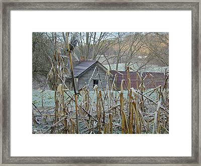 Abandoned Farmhouse And Cornfield Framed Print