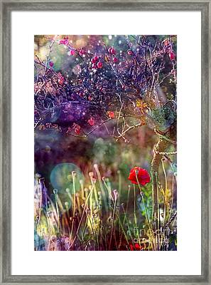 Abandoned Garden Framed Print by Agnieszka Mlicka