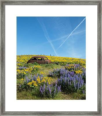 Abandoned In A Field Of Flowers Framed Print by Angie Vogel