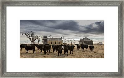 Abandoned Lutheran Church Cattle  Framed Print by Chris Harris