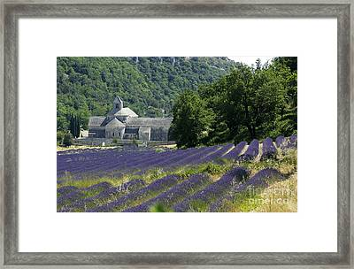 Abbaye Of Senanque. Luberon. Framed Print