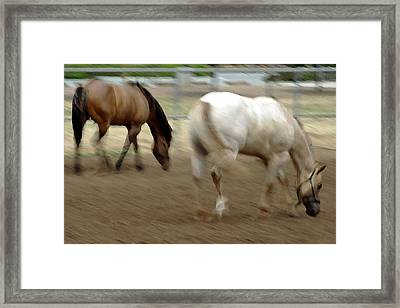 Abbey And Cisco  Framed Print