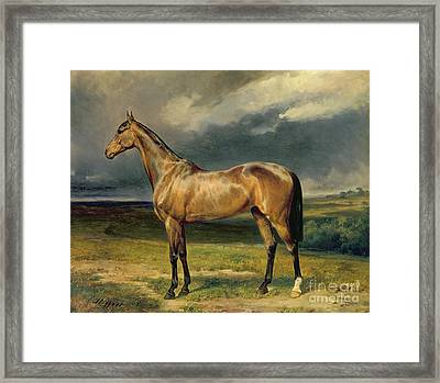 Abdul Medschid The Chestnut Arab Horse Framed Print by Carl Constantin Steffeck