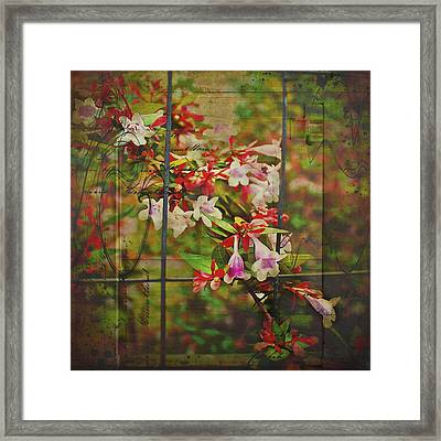 Abelia Coming Through Framed Print