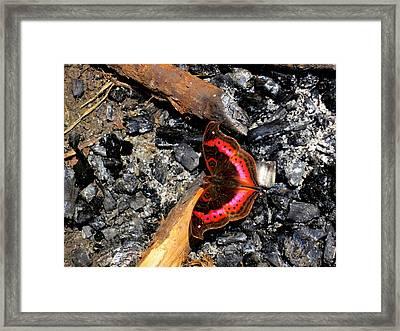 Aberdare Charcoal Framed Print