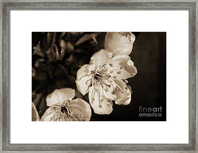 Framed Print featuring the photograph Abiding Elegance by Linda Lees
