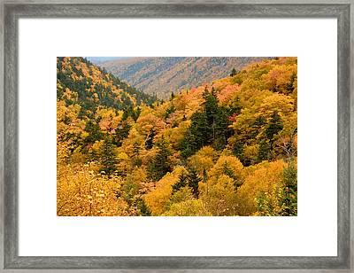 Ablaze With Autumn Glory Framed Print by Nancy De Flon