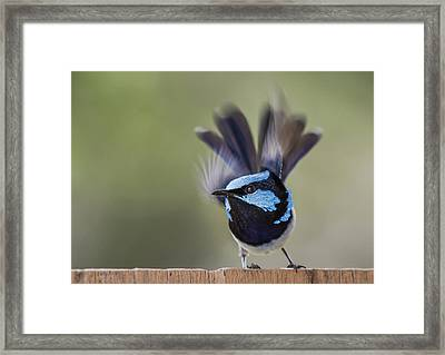 About To Fly Framed Print