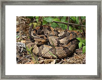 About To Get Bitten Framed Print