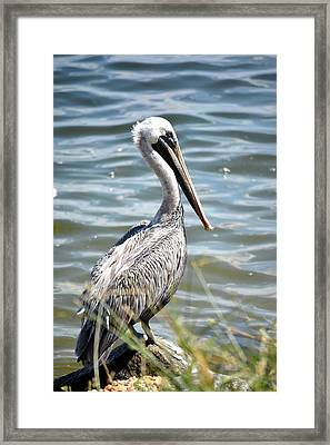 About To Jump In Framed Print by Tamra Lockard