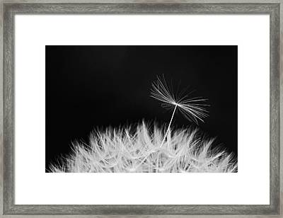About To Leave Home Framed Print