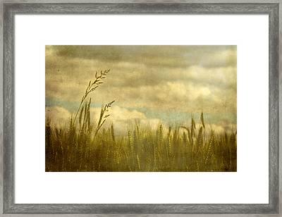Above It All Framed Print by Rebecca Cozart
