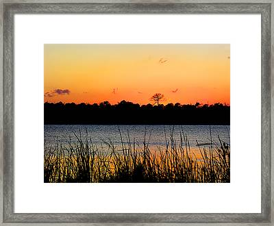 Above The Rest Framed Print