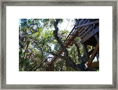 Above The Treeline Framed Print
