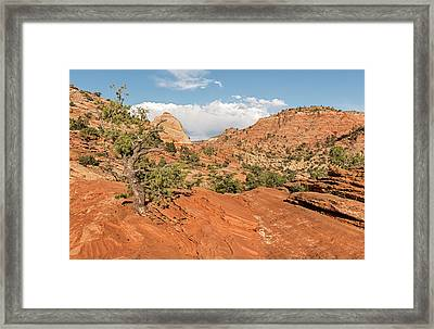Above Zion Canyon Framed Print by Loree Johnson