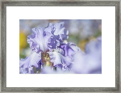 Absolute Treasure 1. The Beauty Of Irises Framed Print