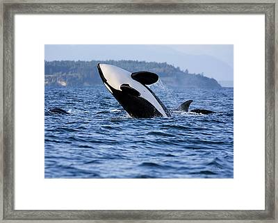 Absolutely Free - Whale Art Framed Print