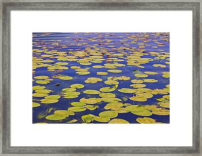 Absolutly Idyllic Framed Print