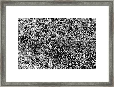 absorbent moss carpeting ground in Iceland Framed Print by Joe Fox