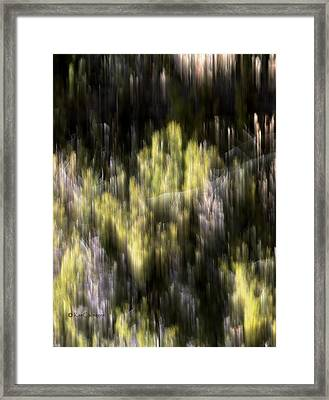 Framed Print featuring the photograph Abstract 3317 In The Forest by Kae Cheatham