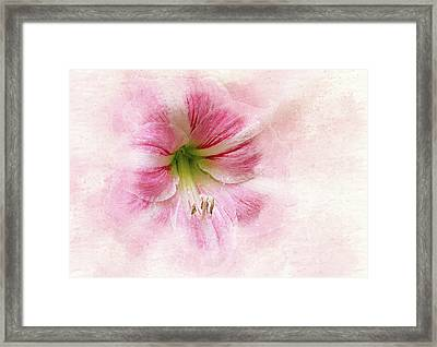 Abstract Amaryllis Framed Print