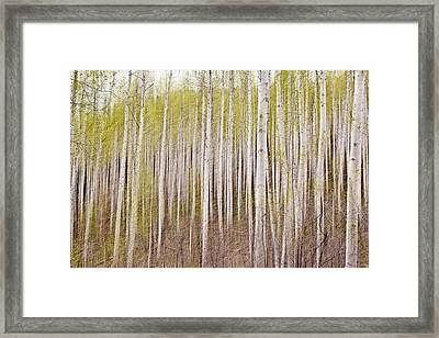 Abstract Aspens Framed Print