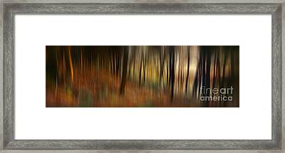 Autumn Forest Framed Print by Rod McLean