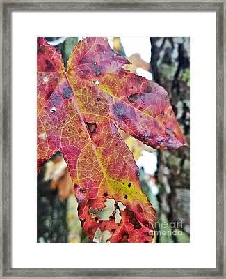 Abstract Autumn Leaf 2 Framed Print
