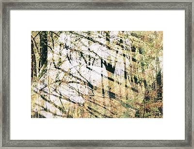 Abstract Autumn Woods Framed Print by Mother Nature
