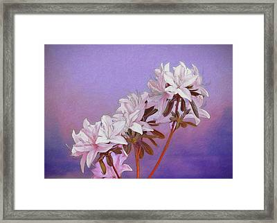 Abstract Azaleas Framed Print by Tom Mc Nemar