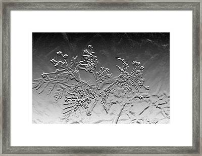 Abstract Black And White  Cow Parsley Framed Print