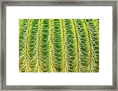 Abstract Cactus Framed Print by Delphimages Photo Creations