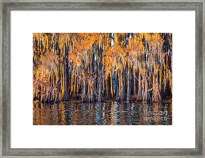 Abstract Caddo Trees Framed Print