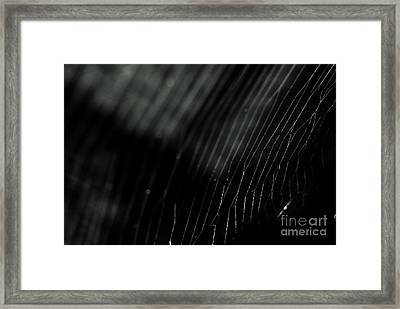 Framed Print featuring the photograph Abstract Cobweb by Yurix Sardinelly