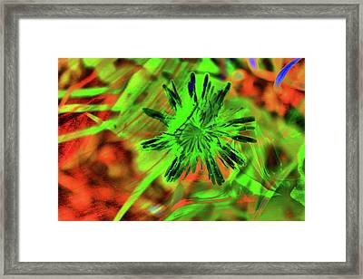 Abstract Dandelion Framed Print by Jeff Swan