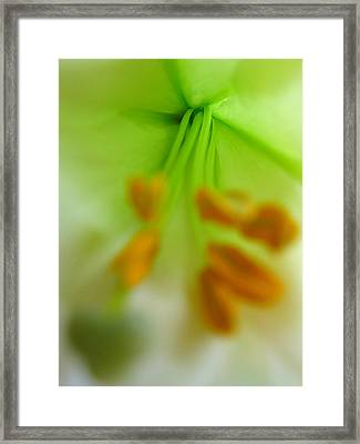 Abstract Easter Lily Framed Print by Juergen Roth