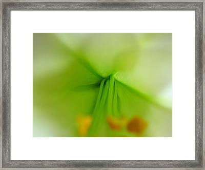 Abstract Easter Lily Petals Framed Print by Juergen Roth