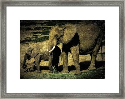 Abstract Elephants 23 Framed Print