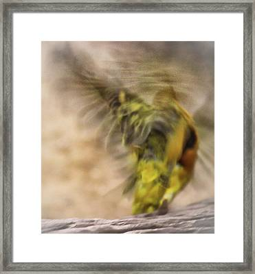 Abstract Finch Framed Print