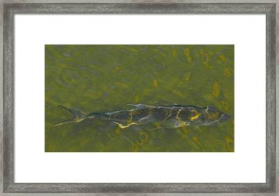 Framed Print featuring the photograph Abstract Fish 2 by Carolyn Dalessandro