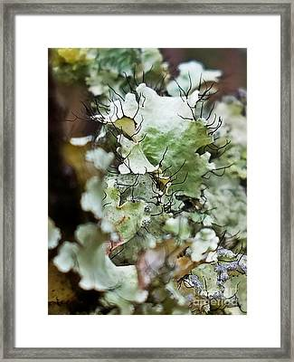 Abstract Flora 1 Framed Print